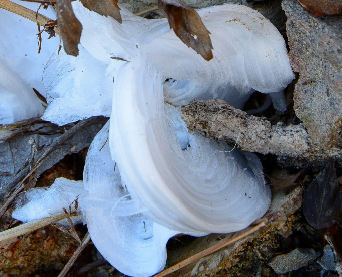 Hickory Nut Mountain and Frost Flowers!